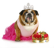 Fairytale princess Royalty Free Stock Photo