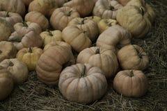 Fairytale Pumpkin Stock Photography