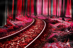 Fairytale railway in the magic forest Royalty Free Stock Photography