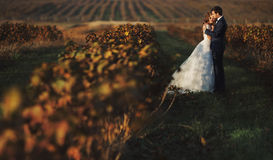 Fairytale romantic couple of newlyweds hugging at sunset in vine. Yard field wth bushes surrounding them Royalty Free Stock Images