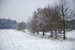 Fairytale snow landscape. Trees and heath moor in the snow Royalty Free Stock Images