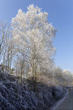 Fairytale snowy freeze winter countryside with blue Sky in Bohemia, Czech Republic Royalty Free Stock Photos