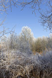 Fairytale snowy freeze winter countryside with blue Sky in Bohemia, Czech Republic Stock Image