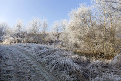 Fairytale snowy freeze winter countryside with blue Sky in Bohemia, Czech Republic Royalty Free Stock Photography
