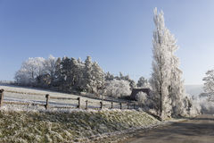 Fairytale snowy winter countryside with frosted icy Trees and Plants Stock Photos