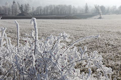 Fairytale snowy winter countryside with frosted icy Trees and Plants Stock Photo