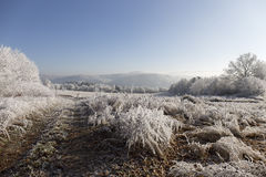 Fairytale snowy winter countryside with frosted icy Trees and Plants Royalty Free Stock Images