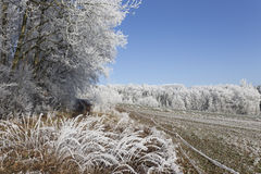 Fairytale snowy winter countryside with frosted icy Trees and Plants Stock Images