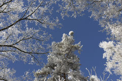 Fairytale snowy winter countryside with frosted icy Trees and Plants Stock Photography