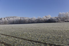 Fairytale snowy winter countryside with frosted icy Trees and Plants Stock Image