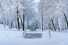 Fairytale winter background with snowbound park. Stock Photography