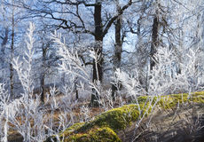 Fairytale winter forest. Royalty Free Stock Photography