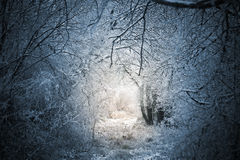 Fairytale winter forest path Stock Images