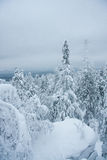 Fairytale winter forest. Taganay. Russia Royalty Free Stock Images