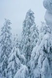 Fairytale winter forest. Taganay. Russia Royalty Free Stock Photography