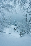 Fairytale winter forest Stock Image
