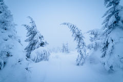 Fairytale winter landscape Royalty Free Stock Images