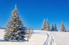 Fairytale winter landscape with snow-covered trees Stock Photos
