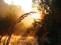 Faisceau de lumière dans la forêt Photos libres de droits