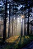 Faisceau du soleil de matin dans la forêt Image stock