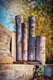 Faisceaux Beamy, forêt d'automne Photo libre de droits
