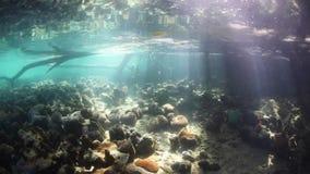 Faisceaux de lumière du soleil sous-marins banque de vidéos