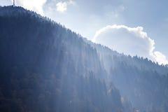 Faisceaux de Sun dans une forêt de montagne Images stock