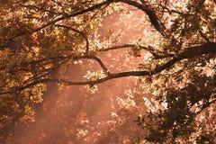 Faisceaux de Sun par des arbres