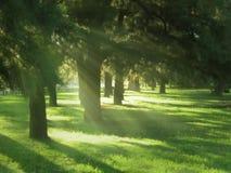Faisceaux de Sun par un bois Images stock