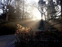 Faisceaux du soleil de forêt d'automne Image stock
