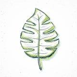 fait main en feuille de palmier dans le style de croquis Photographie stock libre de droits