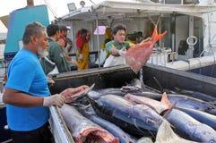 Faites cuire les pêcheurs d'Islanders déchargeant leur crochet dans les ports d'Avati image stock