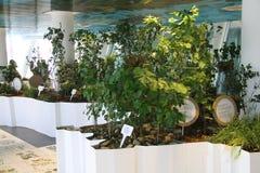 Faites du jardinage au pavillon italien à l'expo 2015 en Milan Italy Photo stock