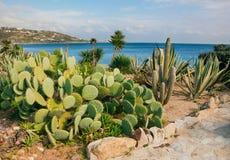 Faites du jardinage contre le contexte de la mer et du ciel photographie stock libre de droits