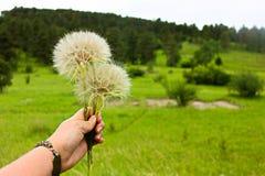 Faites les fleurs d'un souhait dans un pré image libre de droits