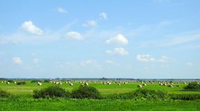 Faites les foins les boules en champ et beau ciel nuageux, Lithuanie Photos stock