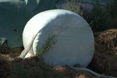 Faites les foins l'ensilage enveloppé dans l'aluminium qui est infusé avec des enzymes pour aider à favoriser la fermentation photo stock