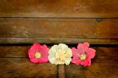 Faith hope and charity. Three hollyhock flowers on old wooden chest symbolizing faith, hope, and charity Royalty Free Stock Image