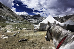 Faith. The horse looking at the snow montain in Tibet royalty free stock images