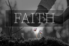 Faith text over hands nurturing a flower. In a conceptual image with selective purple colors to the flowers Royalty Free Stock Photos