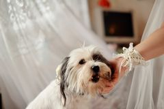 Faithful dog Stock Images