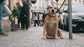 Faithful Miserable Dog Lying on the Sidewalk and Waiting Owner. The Legs of Crowd Indifferent People Pass by. Slow Motion in 96 fps. Sad Disappointed Dog tied stock video