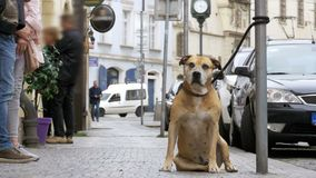 Faithful Miserable Dog Lying on the Sidewalk and Waiting Owner. The Legs of Crowd Indifferent People Pass by. Slow Motion in 96 fps. Sad Disappointed Dog tied stock video footage