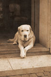 Faithfulness. Dog wait for his master Royalty Free Stock Images