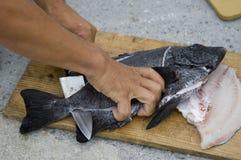 Faixa dos peixes Imagens de Stock