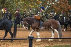 A faixa montada da cavalaria do agregado familiar Fotos de Stock Royalty Free