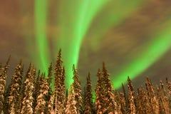 Faixas brilhantes da Aurora sobre árvores do Lit foto de stock