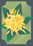 Fajalobi-Blume lizenzfreie stockfotos