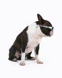 fajny pies Zdjęcie Royalty Free
