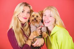 fajny pies pet Yorkshire Terrier traken kocha socjalizacj? Blondynek dziewczyny adoruj? ma?ego ?licznego psa Kobiety u?ci?ni?cie  fotografia stock